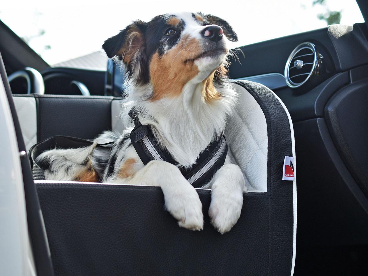 Allsafe Hundesicherheitsgurt